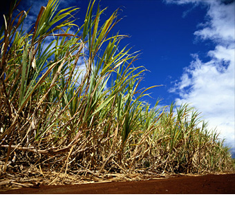 Biofuels Pros And Cons >> The pros and cons of biofuels - Sugar-cane ethanol (3) - FORTUNE