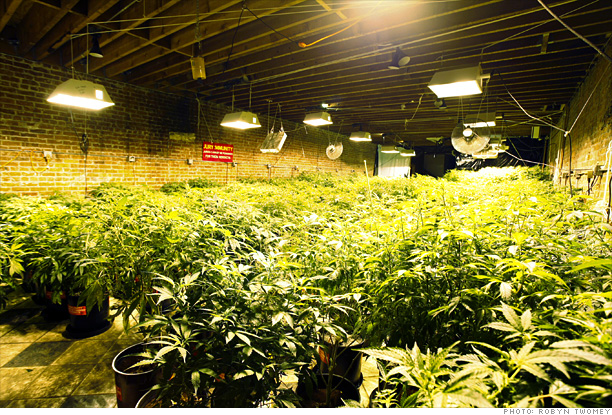 A marijuana plant nursery used by Lee's dispensary in Oakland. Under  federal law, possession of 100 plants is a crime carrying a mandatory  minimum five-year ...